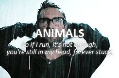 maroon  animals lyrics tumblr