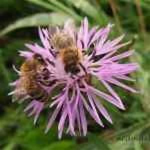 Miele Primavera Spülmaschine : ambiente la primavera alle porte le api cominciano il ~ Michelbontemps.com Haus und Dekorationen