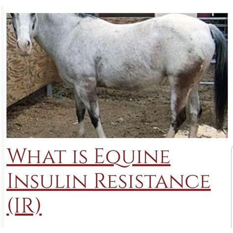 insulin resistance horses horse equine why diabetes short