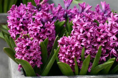 fiori ermafroditi tipi di fiori fiori di piante caratteristiche dei tipi