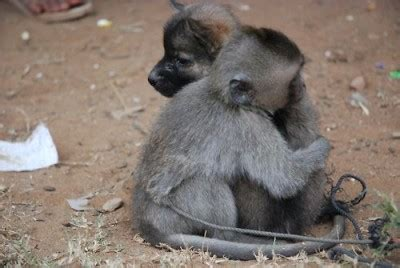 cute monkey pictures cute monkey images tedlillyfanclub