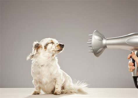 top  dog care essentials dogtime
