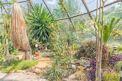 Tropenhäuser Botanischer Garten Zürich by Botanischer Garten Z 252 Rich Tropenhaus Tropische