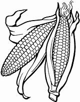 Corn Coloring Pages Ear Cob Drawing Printable Getcolorings Indian Template Fall Unique Vegetables Getdrawings Clipart Vegetable Wickedbabesblog sketch template