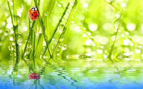 insect ladybug water drops dew green grass reflection sky
