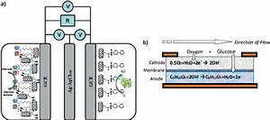A  Schematic Of Enzymatic Biofuel Cell Demonstrated By