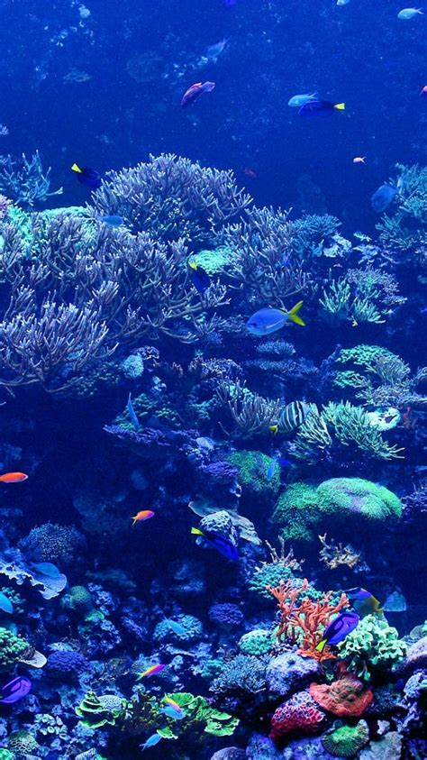 coral reef wallpaper coral reef pictures iphone 6 wallpaper 25137 underwater Underwater