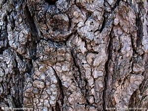 粗壮树皮设计图__背景底纹_底纹边框_设计图库_昵图网nipic.com