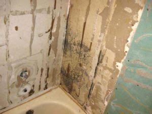 mold removal las vegas environmental pros  rated