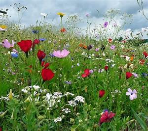 Aktuelle Blumen Im April : bunte wiesenblumen foto bild pflanzen pilze flechten wiese blumen bilder auf fotocommunity ~ Markanthonyermac.com Haus und Dekorationen