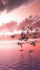 Schöne 3d Bilder : tinnacriss pink rosa himmel schmetterling bilder und blumen fotografie ~ Eleganceandgraceweddings.com Haus und Dekorationen