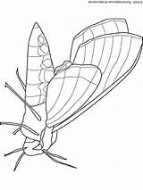 Moth Coloring Pages Lightupyourbrain Butterfly Colouring Insects Snakes Pixels Bug sketch template