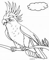 Parrot Coloring Pages Birds Printable Drawing Cool2bkids Getdrawings sketch template