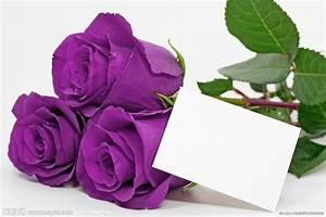 紫色玫瑰摄影图__花草_生物世界_摄影图库_昵图网nipic.com