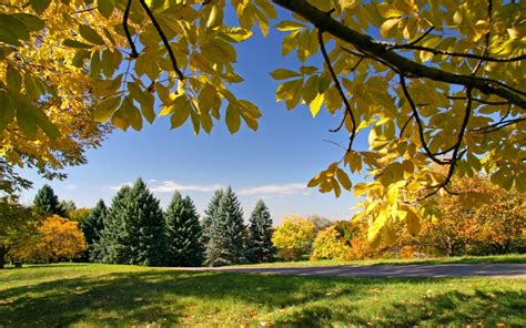 Gold Autumn Wallpapers by Autumn Gold Trees Of Autumn Nature Other Hd Desktop