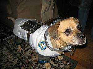 Astronaut Halloween Costume for Dogs (page 3) - Pics about ...