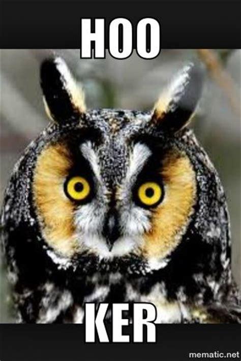 Funny Owl Memes - funny owl meme ha ha very funny pinterest
