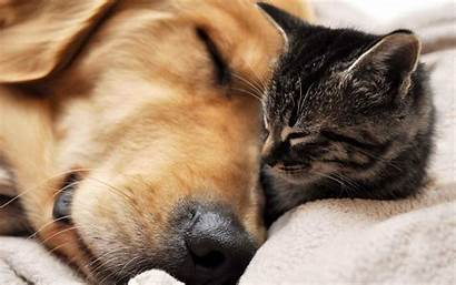 Wallpapers Cats Dogs Cat Dog