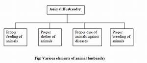 Animal  Animal Husbandry In India Pdf
