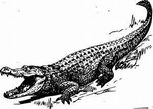 Alligator Clip Art at Clker.com - vector clip art online ...