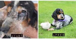 Newa Avant Apres : elle trouve un chien laiss pour mort dans son jardin des milliers d inconnus d cident de l ~ Maxctalentgroup.com Avis de Voitures