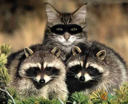 funny animals  animals background wallpapers
