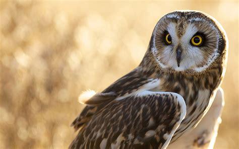 owl bird sits wallpaper 1920x1200 13884