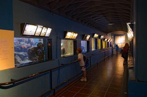 aquarium banyuls sur mer horaires banyuls biodiversarium