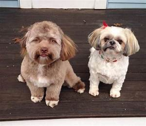 Dog That Looks Like A Human (5 pics)