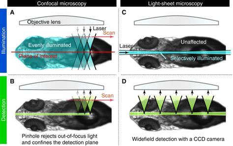 light sheet microscopy sguenther eu