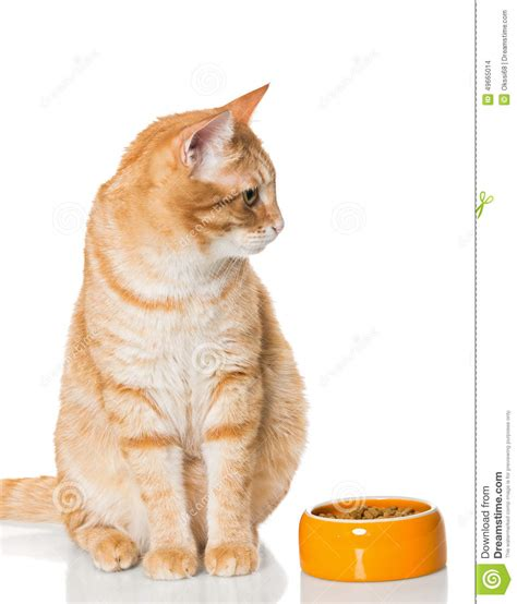 Red Cat Sitting Near The Bowl Of Dry Food Stock Photo