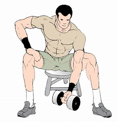 Muscle Concentration Curls Exercises Exercise Animated Biceps