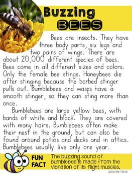 bees nonfiction reading   grade stories tpt