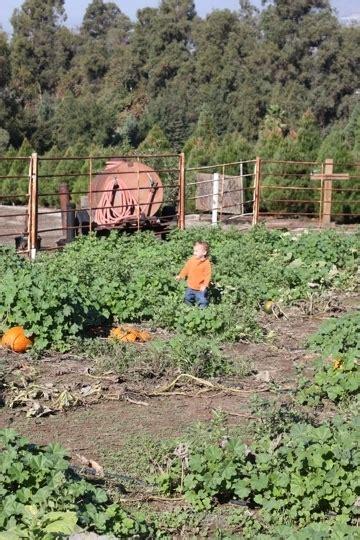 christmas tree farms in sacramento greenspot tree farm mentone ca kid friendly activity trekaroo