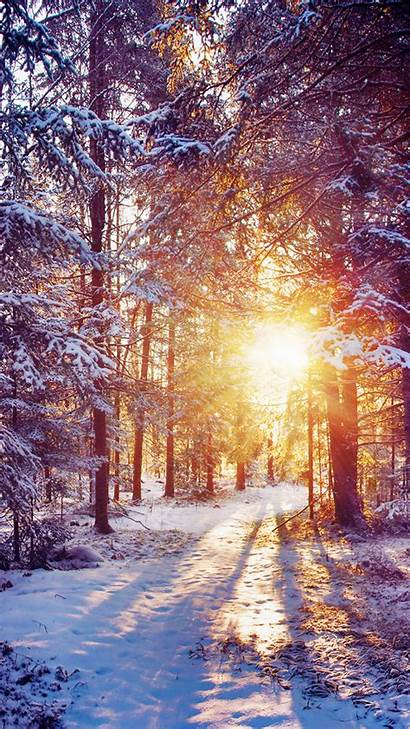 Android Winter Forest Sun Rays Nature Wallpapers