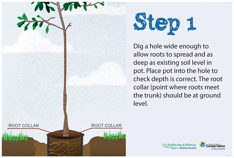 How To Design A Flower Garden Step By Step get ready to plant some trees partners in project green