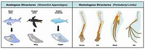 Importance and Concepts Of Comparative Anatomy With Examples