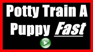how to potty train a puppy to not poop indoors house With how to train dogs to go to the bathroom outside