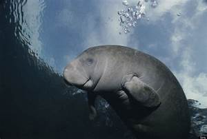 20 Photos Of Manatees Doing Manatee Things And Being Very ...