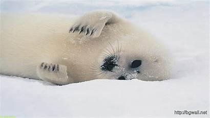 Sea Lion Lions Background Decide Bears Animals