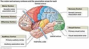 Functional Areas Diagram I  Motor