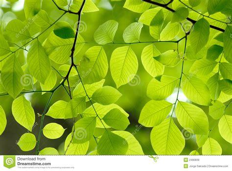Grün Lässt Hintergrund Lizenzfreie Stockbilder  Bild 2490839