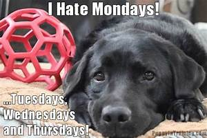 I Hate Mondays! - Puppy In Training