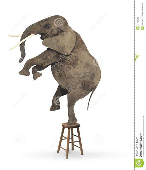 elephant acrobat stock illustration image