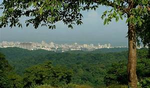 Sanjay Gandhi National Park: The Heart and Lungs of a Wild ...