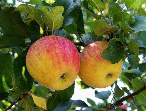 Aepfel Richtig Ernten Und Wie Lagern by Erntezeit Wie Lagern Wir Obst Und Gem 252 Se Richtig