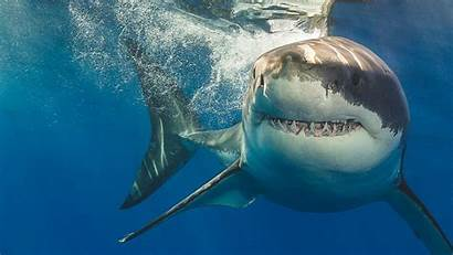 Shark Attack Yourself Protect Safety Lose Everything
