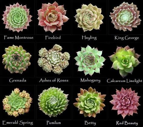 types of succulents assorted types of succulents 5 in the garden pinterest king george types of succulents