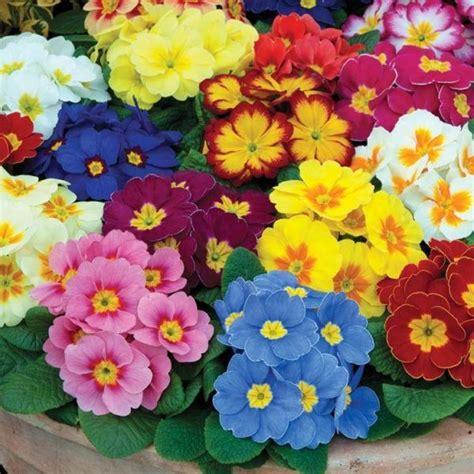 Cuáles son las flores de primavera ElBlogVerde com