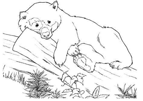 ausmalbilder tiere  ausmalbilder malvorlagen